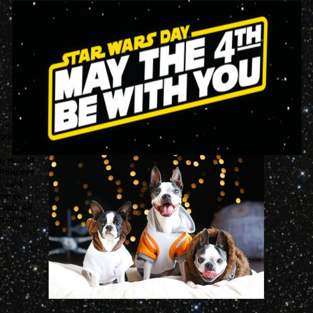 May 4 pet adoptions